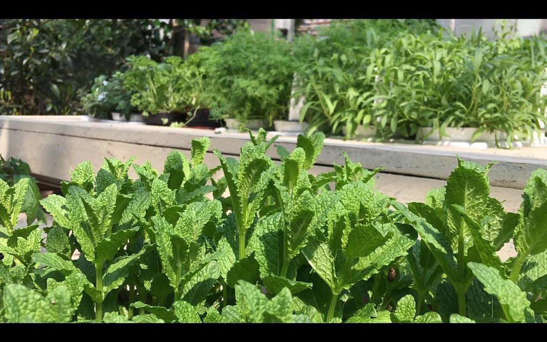 Grüße aus unserem Kräutergarten. #natürlichbesonders…