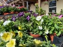 Es ist soweit, die Sommerbepflanzung steht vor der Tür……