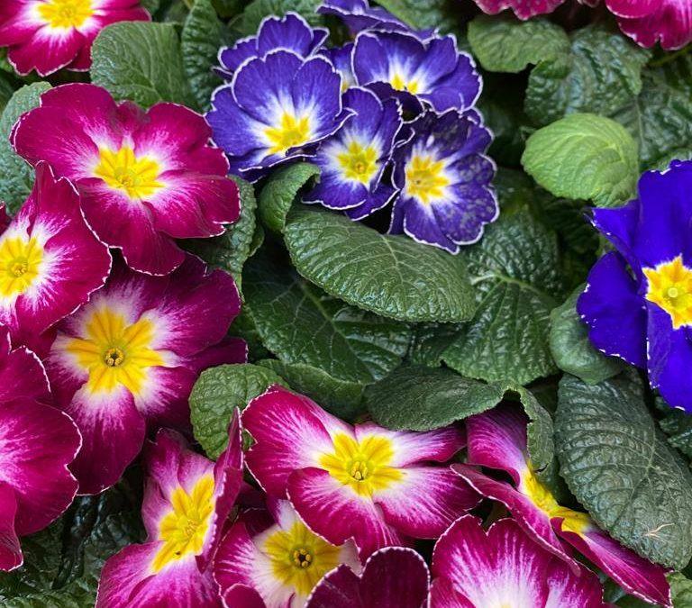 Bei milden Temperaturen begrüßen wir in der Floristik den Frühling. Wir bieten T…