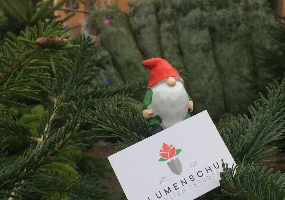 Das stehen sie – unsere #Weihnachtsbäume  KOSTENFREIE LIEFERUNG !  IHR SUCHT AUS…