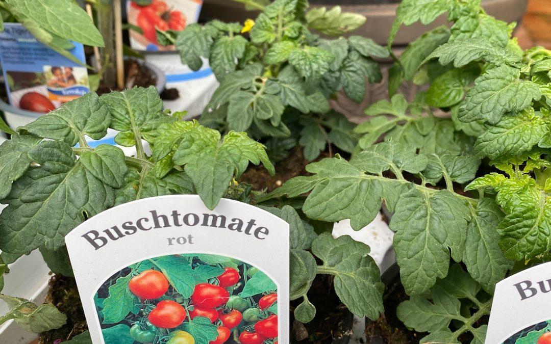 Neben den schönsten Beet- und Balkonpflanzen bieten wir auch verschiedene Kräute…