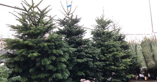 Weihnachtsbaumverkauf bei Blumen Schui