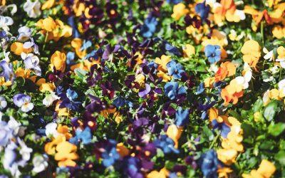 Blumen Schui updated their cover photo.