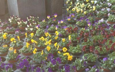 Der Frühling steht, zu mindest pflanzlich, in de…