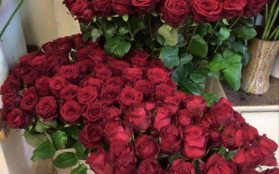 Die Rosen haben wir in verschieden Längen ab 1,5…