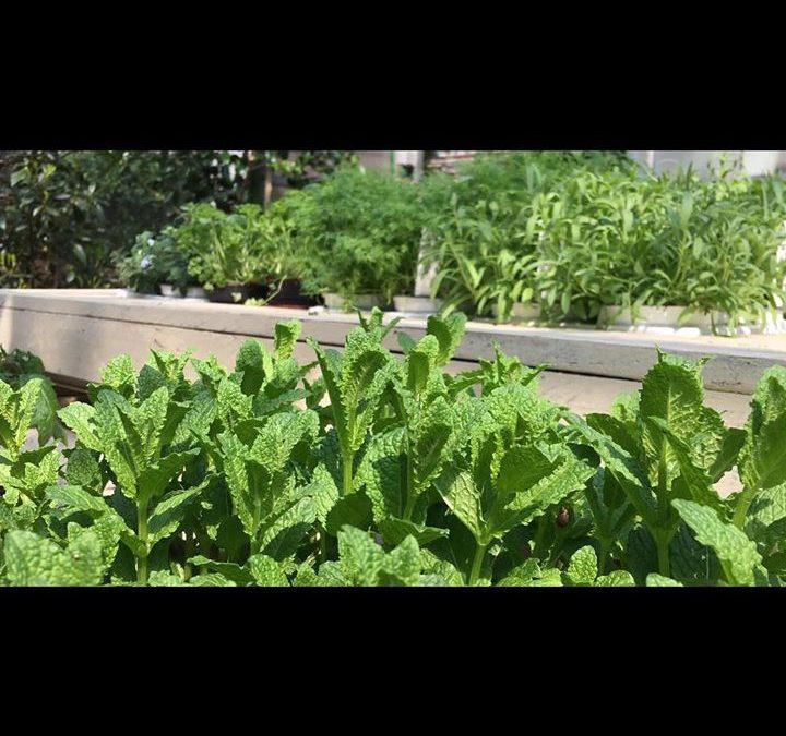 Grüße aus unserem Kräutergarten.  #natürlichbeso…