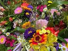 Bild könnte enthalten: Pflanze, Blume, Natur und im Freien