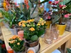 Bild könnte enthalten: Personen, die sitzen, Pflanze, Blume, Tisch und Innenbereich